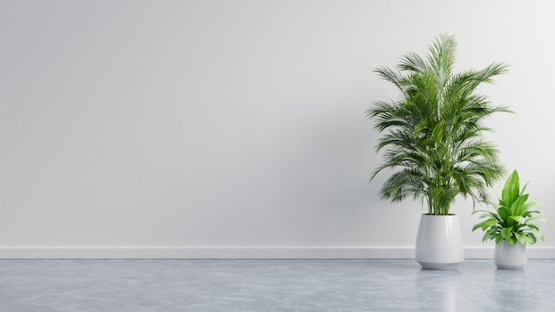 White wall empty room with plants on a floor.