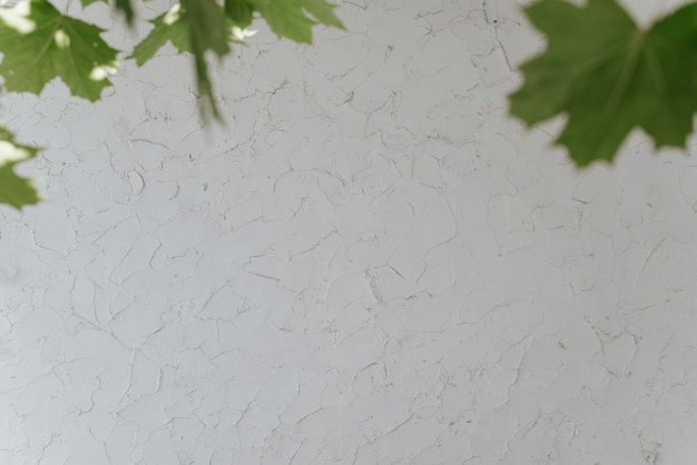 White wall texture, strokes of decorative putty, frame from tree leaves during the day, outdoors. wall backdrop, copy space