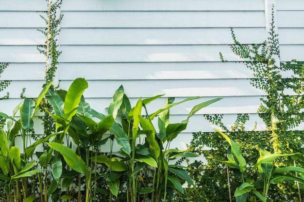 벽에 나무 잎과 흰 벽 프리미엄 사진