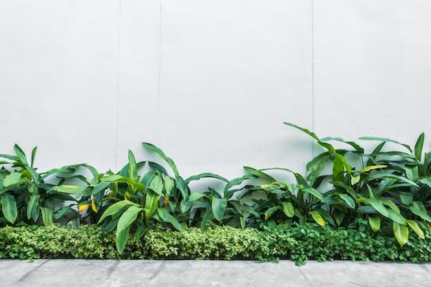 벽에 나무 잎과 흰 벽
