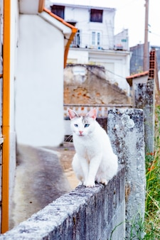 White wild cat sitting on a wall