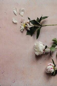 분홍색 오래된 콘크리트 배경에 녹색 잎이 있는 흰색 시든 모란 꽃이 평평하게 놓여 있습니다.