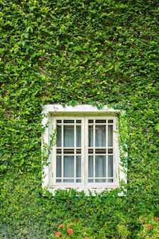 Белое окно с зеленым плющом