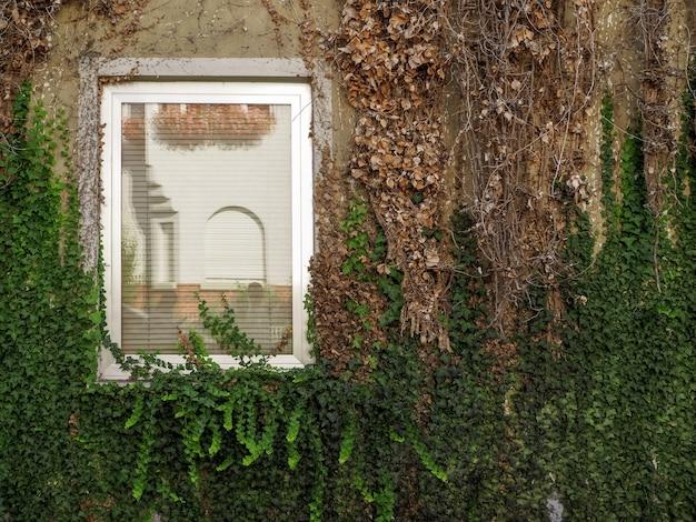 Белое окно на стене заросло коричневыми и зелеными ветками и листьями на немецком доме
