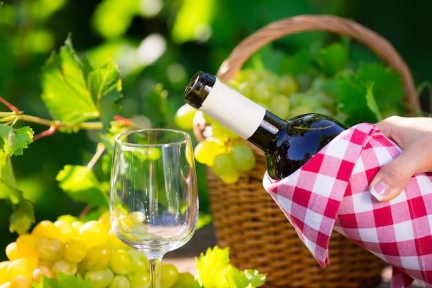 화이트 와인 병, 유리, 어린 덩굴, 그리고 녹색 봄 배경에 있는 포도 다발