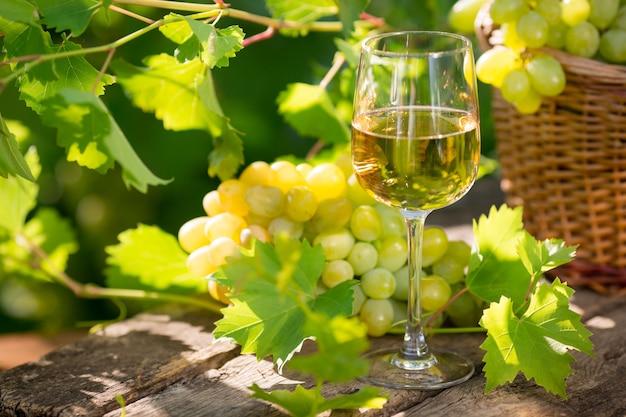 유리잔에 든 화이트 와인, 어린 포도나무, 그리고 푸른 봄 배경에 있는 포도 다발