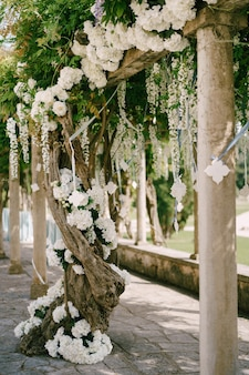 White wisteria with large clusters of flowers on the crossbars by the columns.
