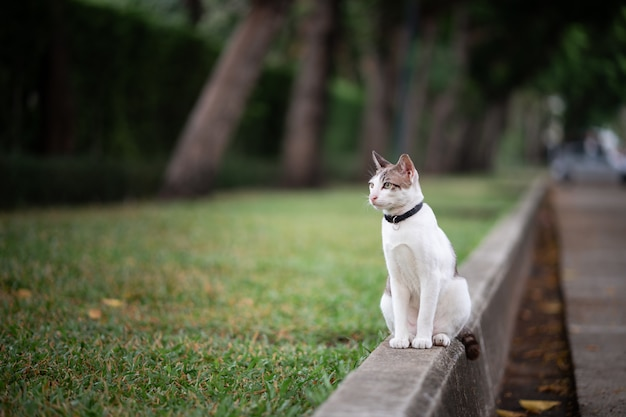 A white with brown stripe cat is standing on the road in the garden.