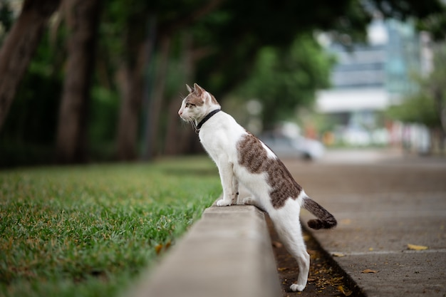A white with brown stripe cat is walking in the garden.