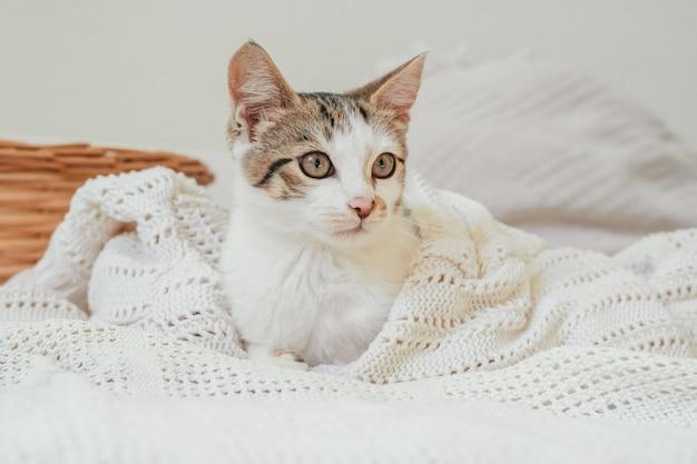 Белый с серыми полосами котик 3-4 месяца лежит в белом вязаном одеяле рядом с плетеной корзинкой и смотрит в сторону. котенок беспородный