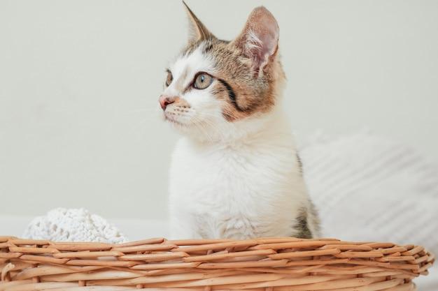 Белый с серыми полосами котик 3-4 месяца сидит в плетеной корзине и удивленно смотрит в сторону. заинтересованный беспородный котенок