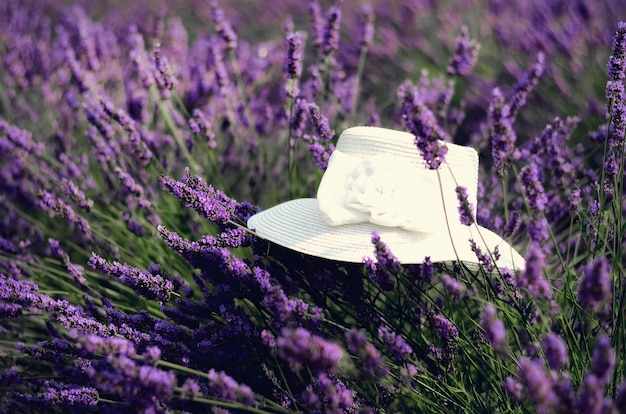 White woman's hat on violet lavender bushes.