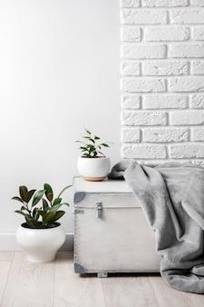 흰색 나무 상자와 흰색 벽 배경에 흰색 화분에 어린 집 식물. 복사 공간