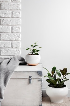 White wooden box and young home plants in white flower pots on white wall background. copy space
