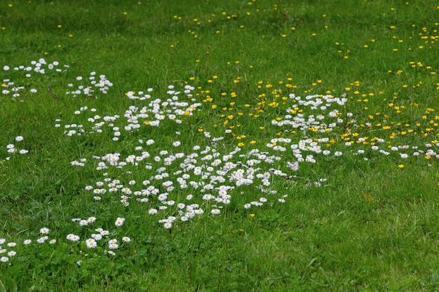 White and yellow flowers growing on field