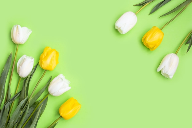 White and yellow tulips flowers on green background.