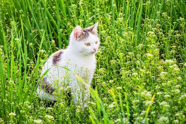 A white young cat sits in the garden among the thick grass_