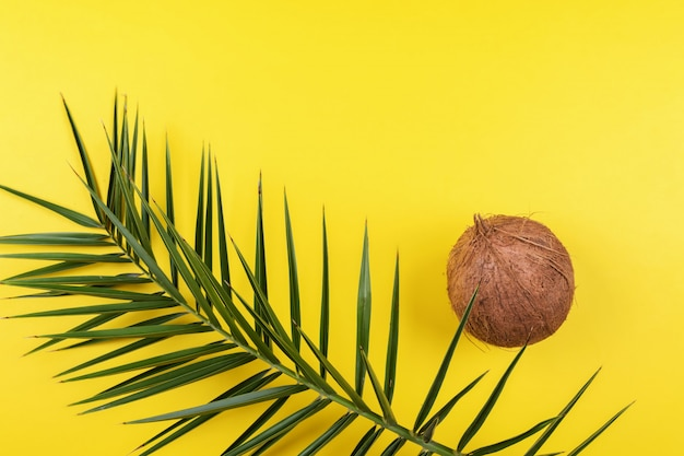 Whole coconut with palm leaf on a bright yellow , mimimal contemporary art
