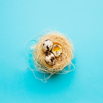 Whole and cracked quail eggs in nest