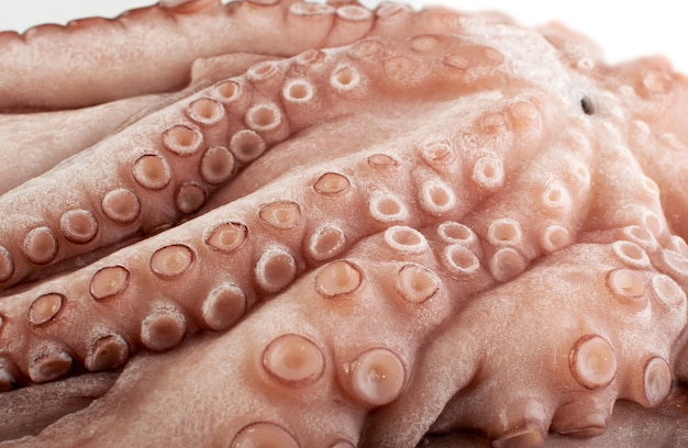 Whole frozen octopus with big tentacles. raw iced seafood, squid, calamari or cuttlefish texture closeup
