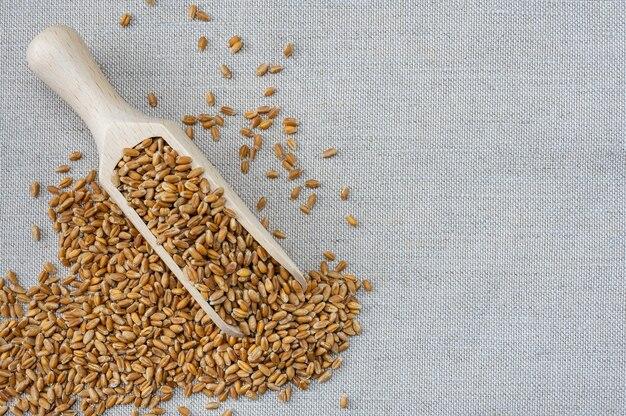 삼 베 바탕에 통 밀 곡물 커널입니다. 밀 곡물 농업 배경입니다.
