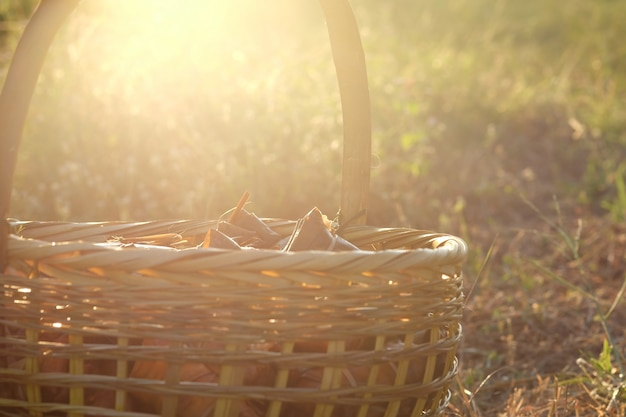 Wicker basket on bananas with sticky rice (khao tom mat or khao tom pad) backlight during sunset.