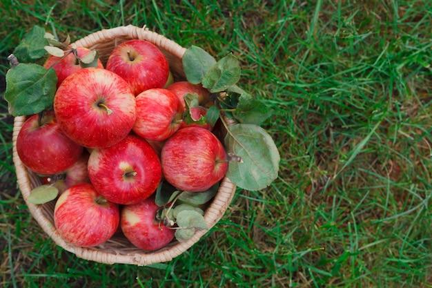 Плетеная корзина с красными спелыми яблоками