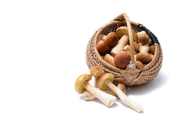 Плетеная корзина с грибами подберезовик на белом фоне