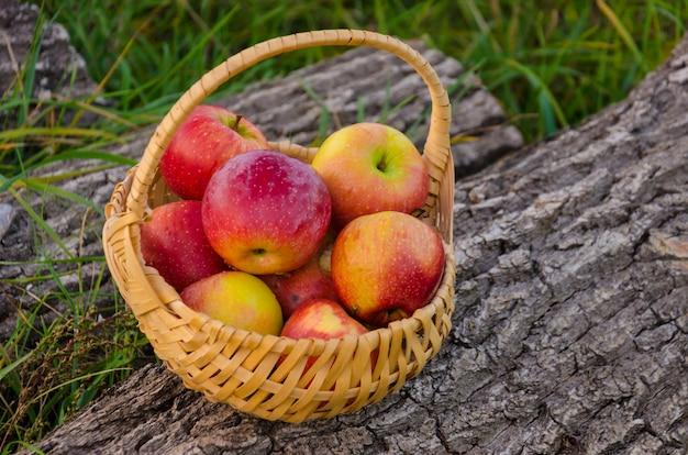 緑の芝生に対してウッドデッキに立っている真っ赤なリンゴと枝編み細工品バスケット