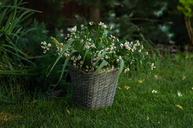 Плетеная корзина с букетом ромашек на зеленой траве в саду