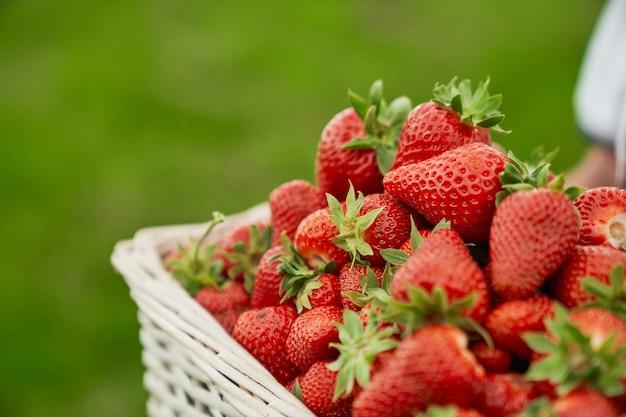 新鮮な赤いイチゴの籐のバスケット