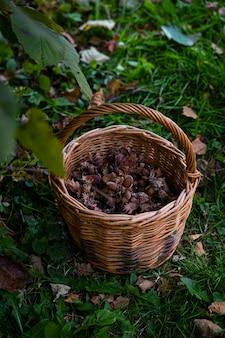 Плетеная корзина со свежесобранным фундуком, стоящим под деревом.