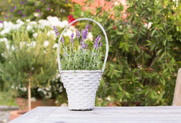 Wicker basket with lavender.