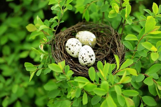 녹색 나무 위에 계란 고리 버들 세공 둥지