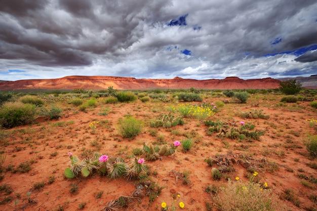 野生の花と広角の砂漠の風景