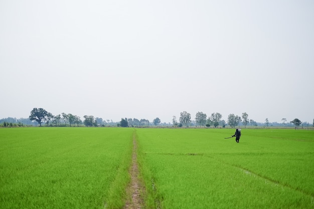 Wide angle of a farmer carrying a chemical fertilizer sprayer is walking in the field.