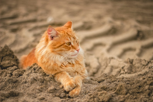 Wide angle shot of a cat lying down on sand during daytime