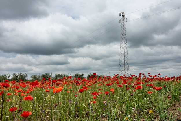Wide angle shot of an electricity transmission tower on a field full of flowers under a cloudy sky