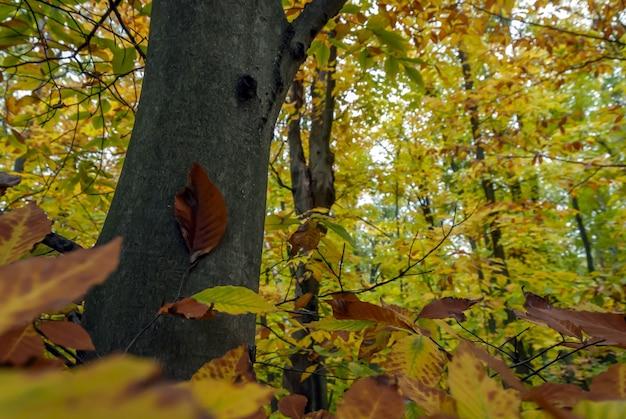 Colpo grandangolare della foresta piena di alberi con foglie verdi e gialle