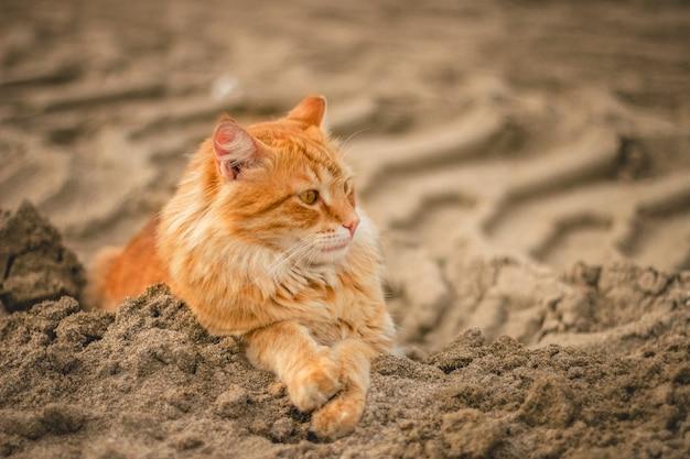 Широкоугольный снимок кошки, лежащей на песке днем