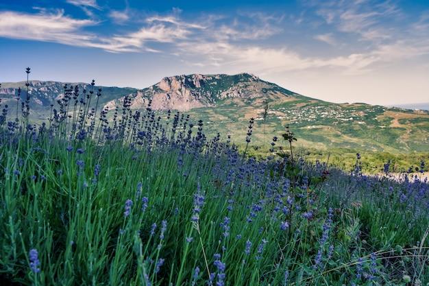 Широкоугольный снимок поля травы на горе под голубым небом