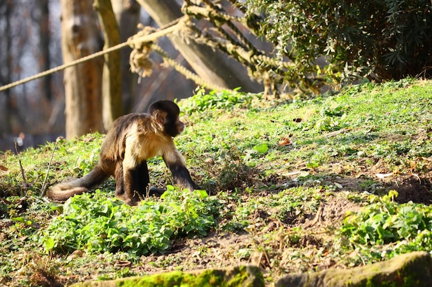 Широкоугольный снимок обезьяны, стоящей на зеленой траве