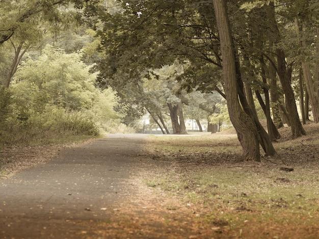 森の木々の間を通る歩道の広角ショット