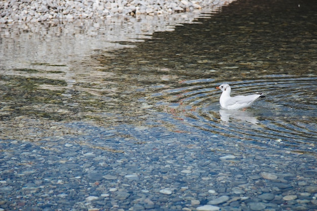낮 동안 물 위의 흰 새의 광각 샷