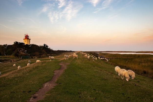 塔の横にある青い空の下で草の上をブラウジングする牛の広角ショット