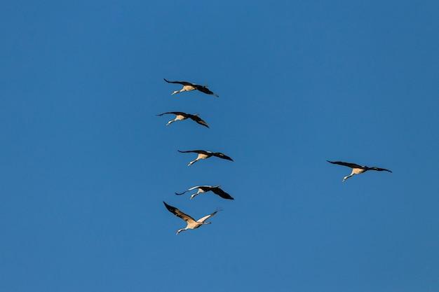 青い空の下を飛んでいる数羽の鳥の広角ショット