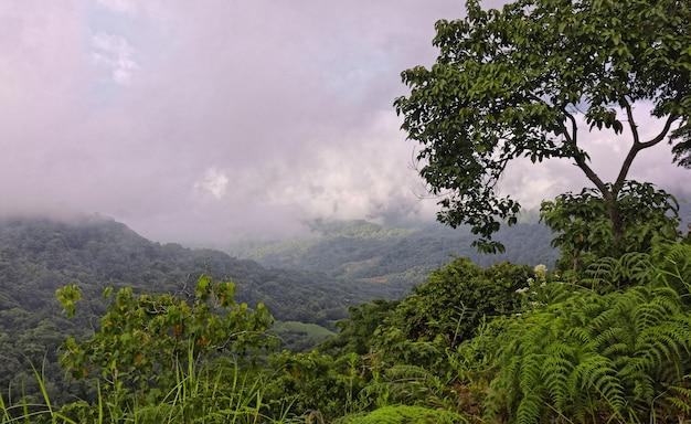 Широкоугольный снимок нескольких деревьев в лесу на горе