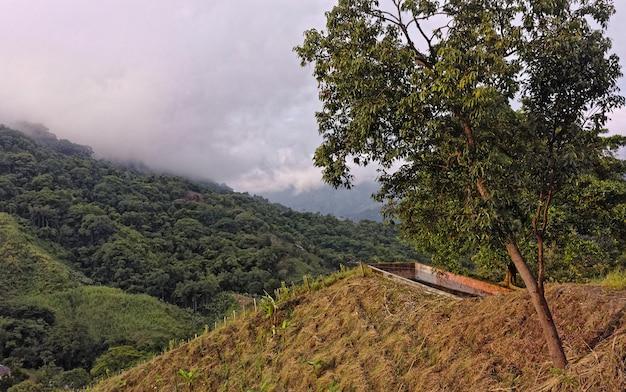 山の森の中のいくつかの木の広角ショット