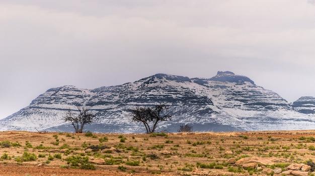 山の前の乾燥した風景にいくつかの木の広角ショット