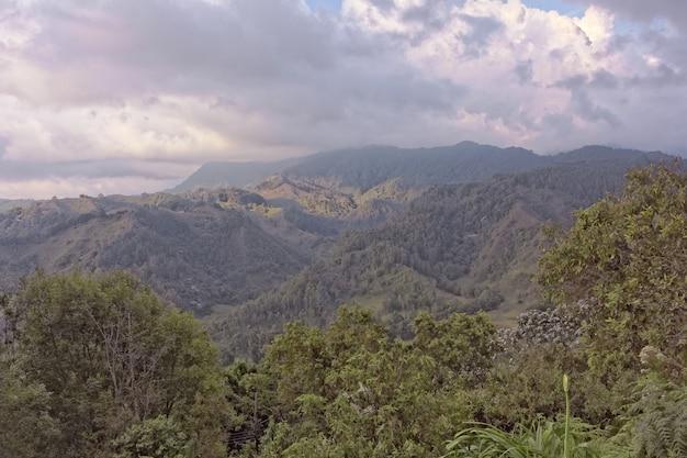 낮 동안 산에 나무와 숲의 와이드 앵글 샷